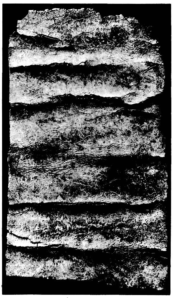 sur un rouleau de plomb avec inscription ph nicienne trouv carthage pers e. Black Bedroom Furniture Sets. Home Design Ideas