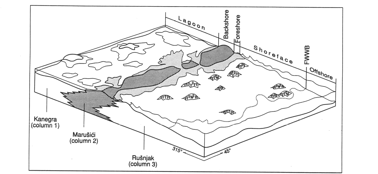 Influence Of Synsedimentary Tectonics And Eustatic Changes
