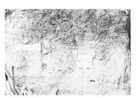 Fig. 17 La Digne-d'Aval : silos médiévaux recoupés verticalement au nord de l'église paroissiale (cl. D. Baudreu)